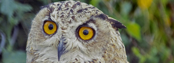 Early bird or a night owl?